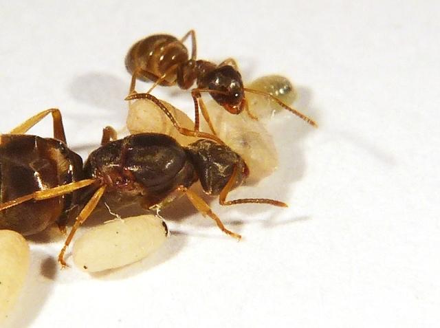 شركة مكافحة النمل الابيض بالدمام (@sameer4564) Cover Image