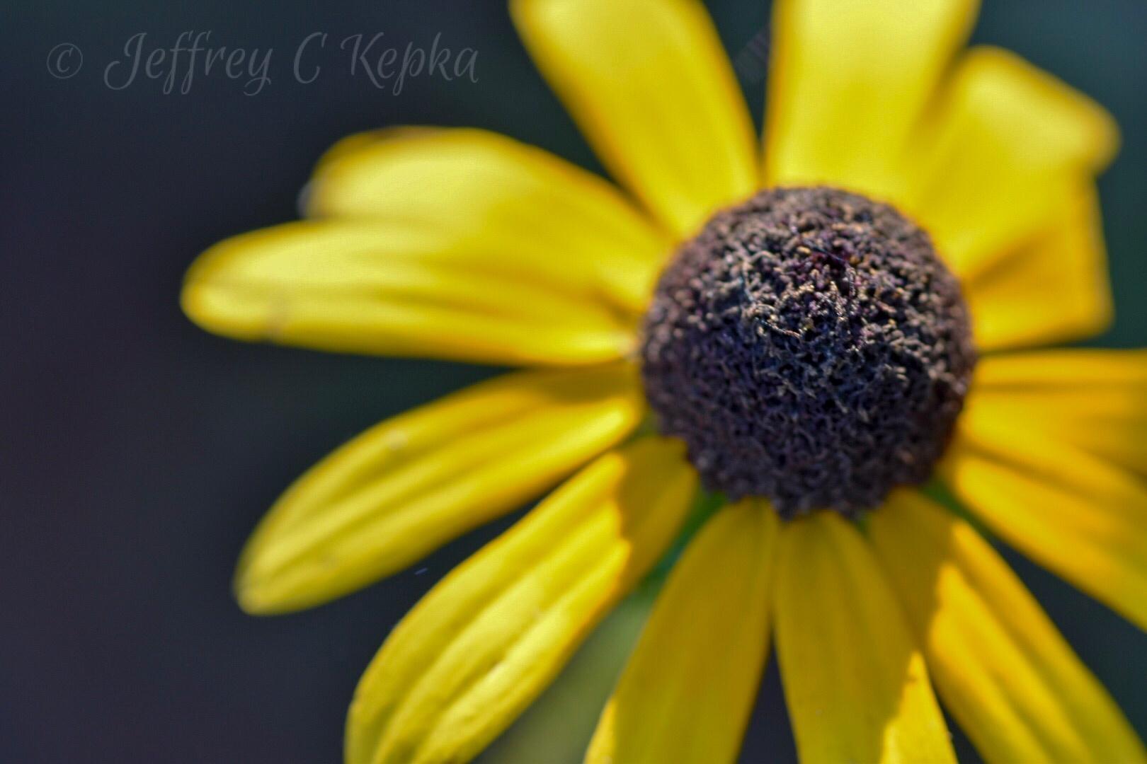 jeffrey kepka (@aquamarine_warrior) Cover Image