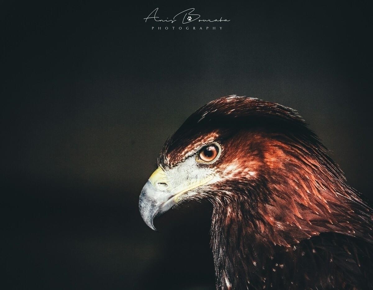Anis Bouraba (@anidbouraba) Cover Image