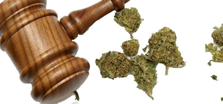 (@buyweedmarijuana) Cover Image