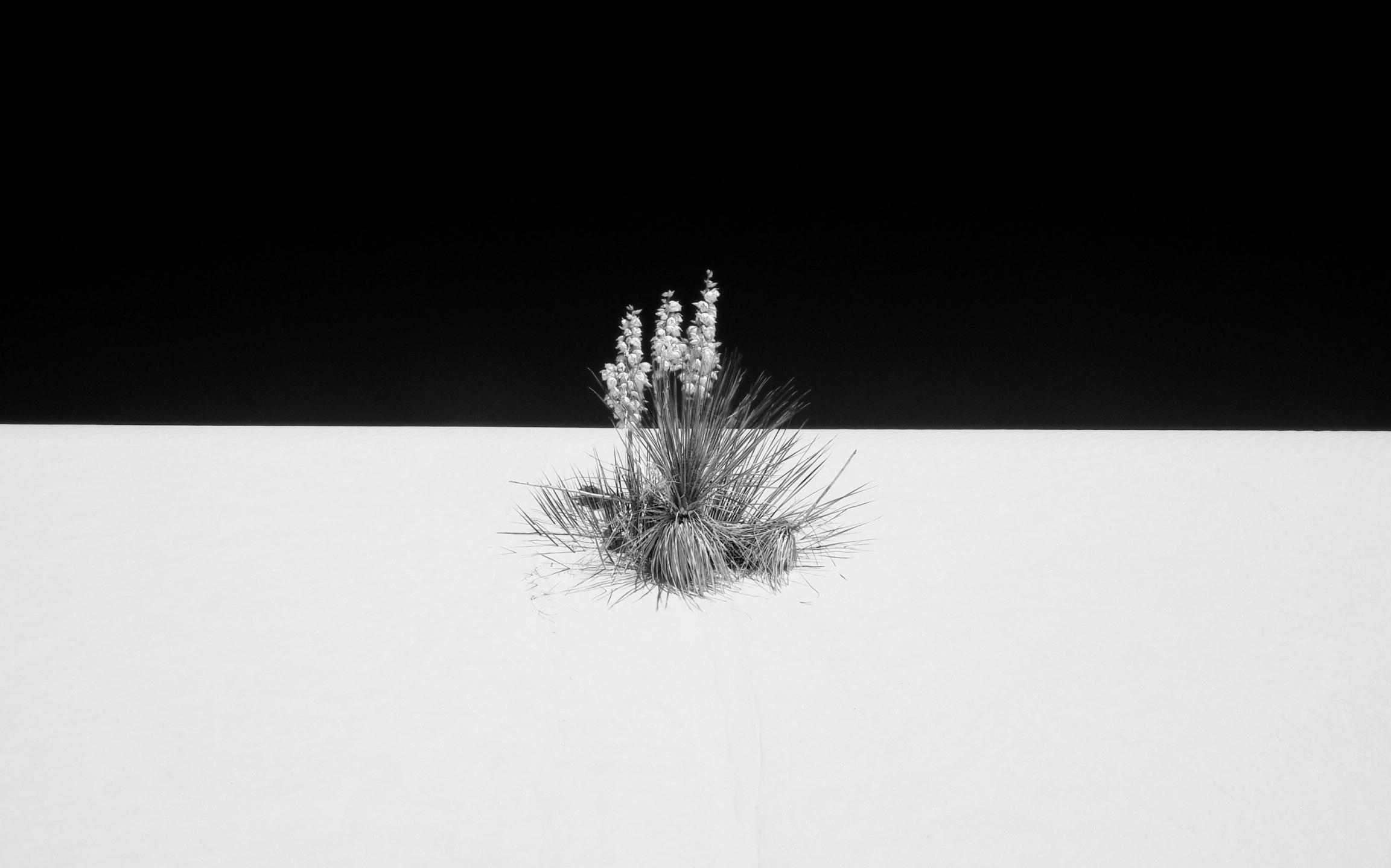 Bjorn Kleemann (@bkleemann) Cover Image