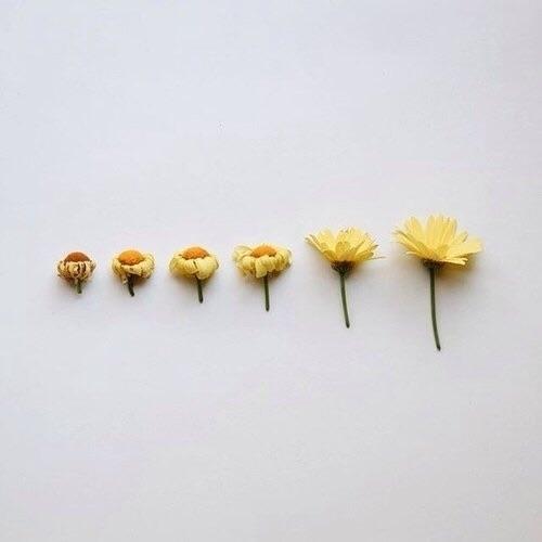 nuna (@poemomo) Cover Image