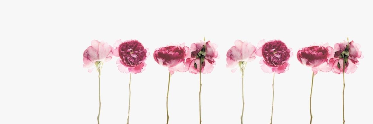 Sakura (@skwr) Cover Image