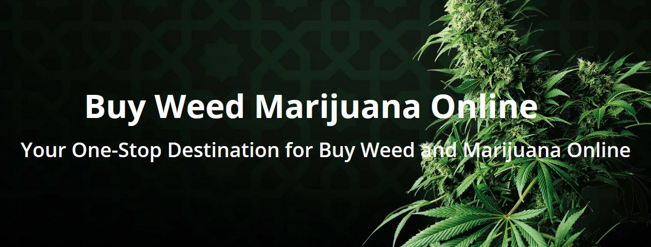 Gary McCathy (@buyweedmarijuanas) Cover Image