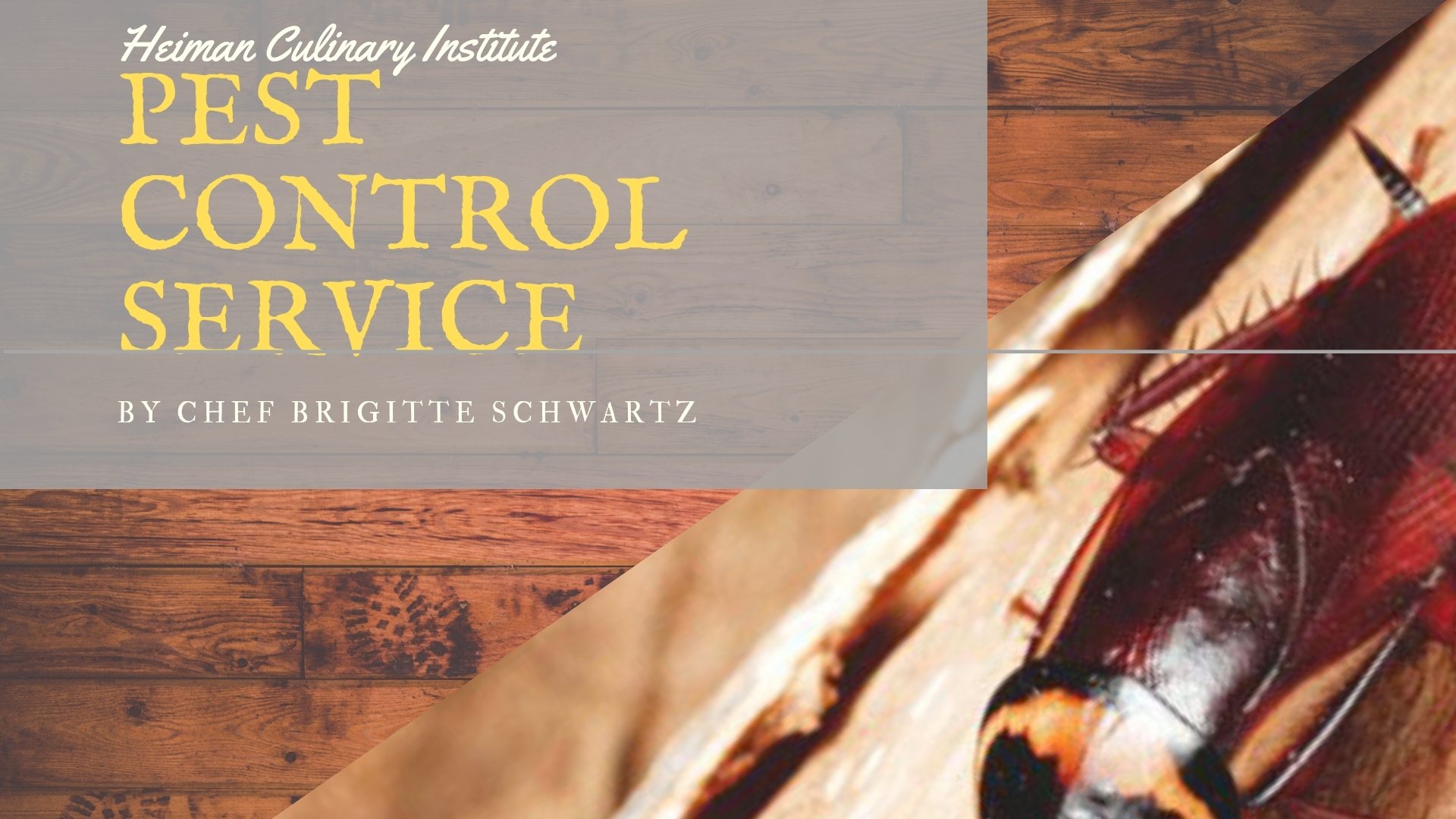 Termite & Pest Control (@termitepestcontrolservices) Cover Image