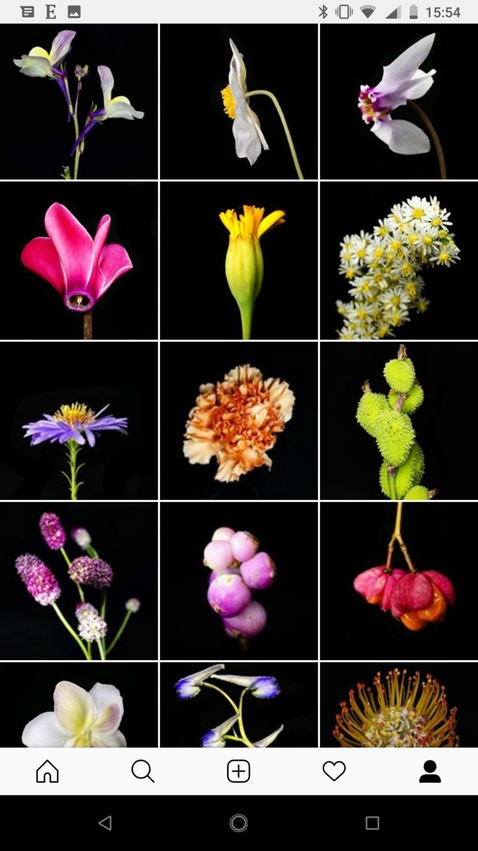 Flamboyant Flowers (@flamboyantflowers) Cover Image