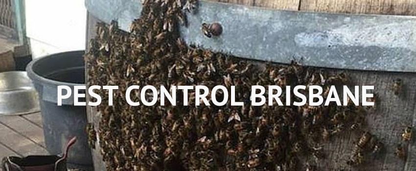 Same Day Pest Control Brisbane (@samedaypestcontrol) Cover Image