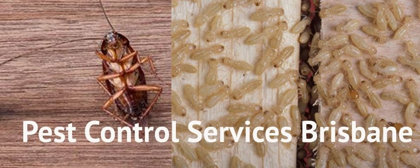 Panther Pest Control Brisbane (@pantherpestcontrol) Cover Image