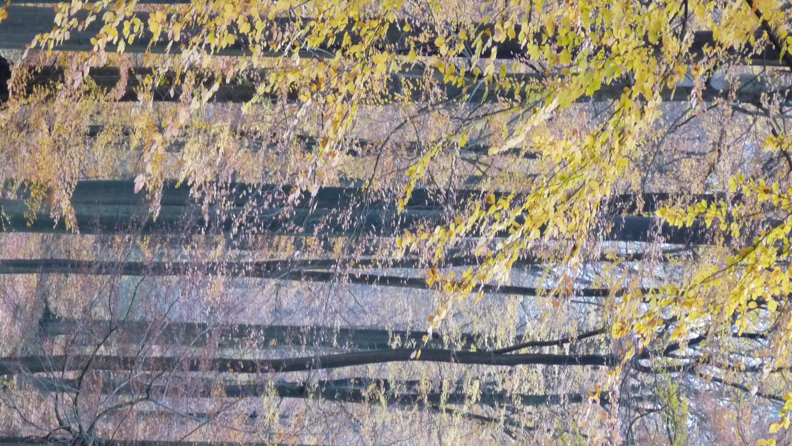 Aurantifolia (@aurantifolia) Cover Image