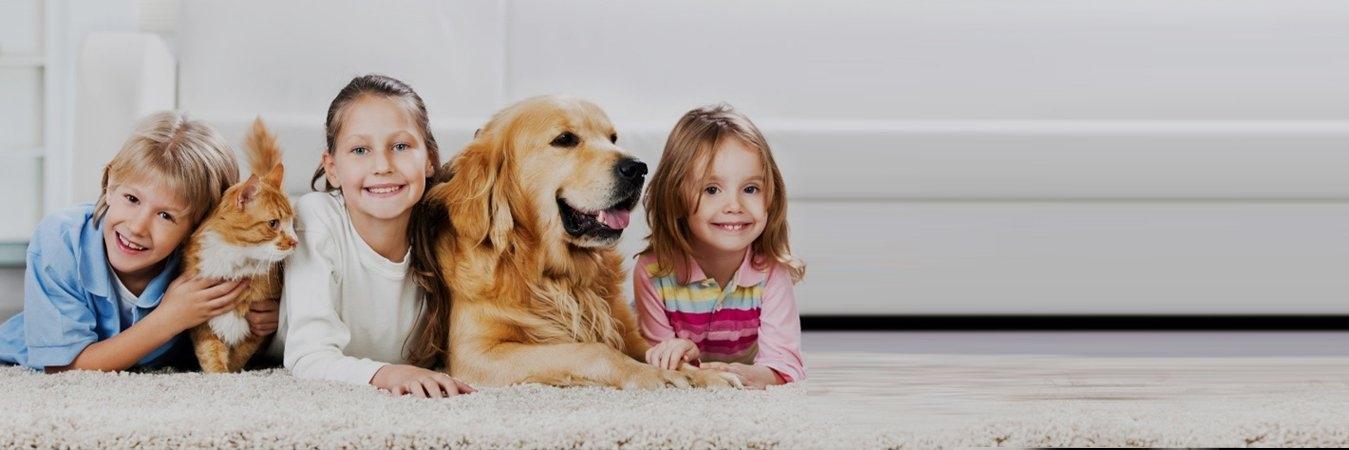 Bloor Kipling Animal Clinic (@bloorkipiling) Cover Image
