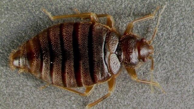 Bed Bug Control Melbourne (@bedbugpestcontrolmelbourne) Cover Image