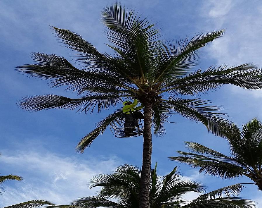 Island Ohana Tree & Landscaping Services LLC (@oahutrees) Cover Image