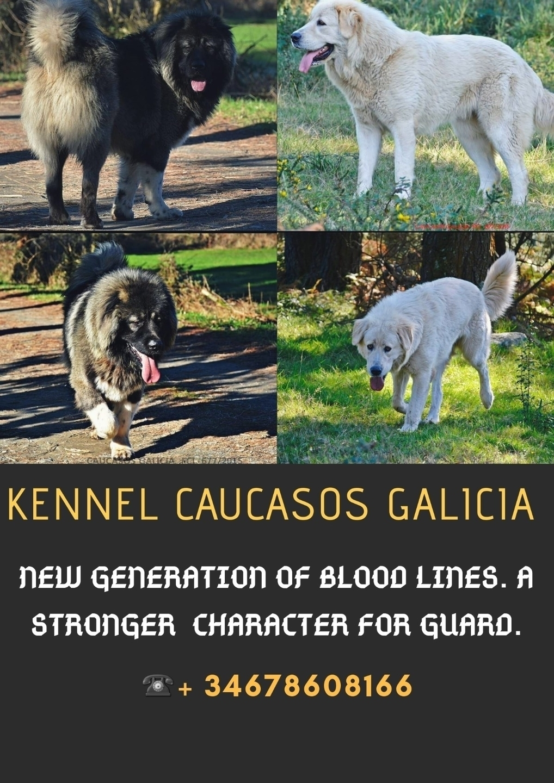 Caucasos Galicia (@caucasos) Cover Image
