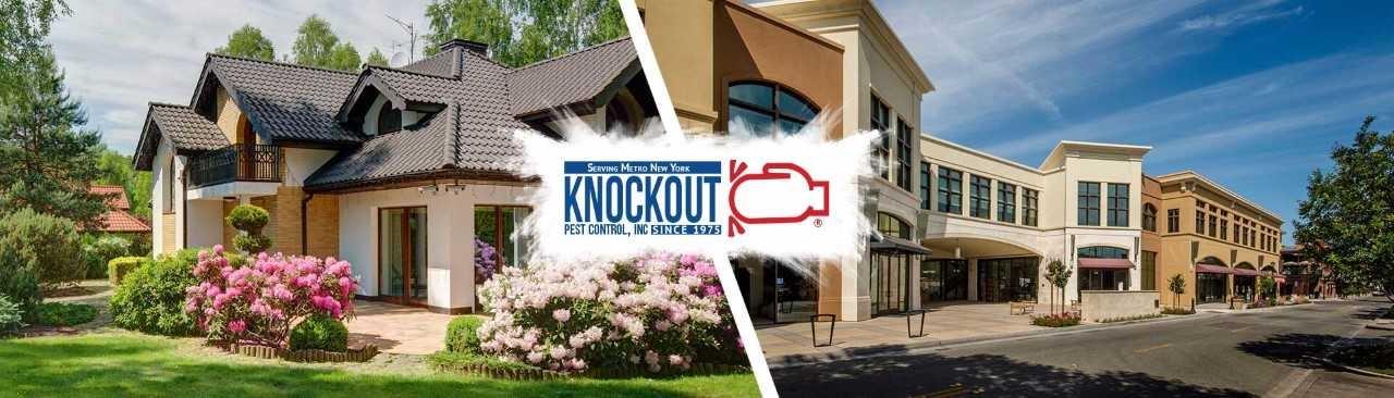 Knockout Pest (@knockoutpest) Cover Image