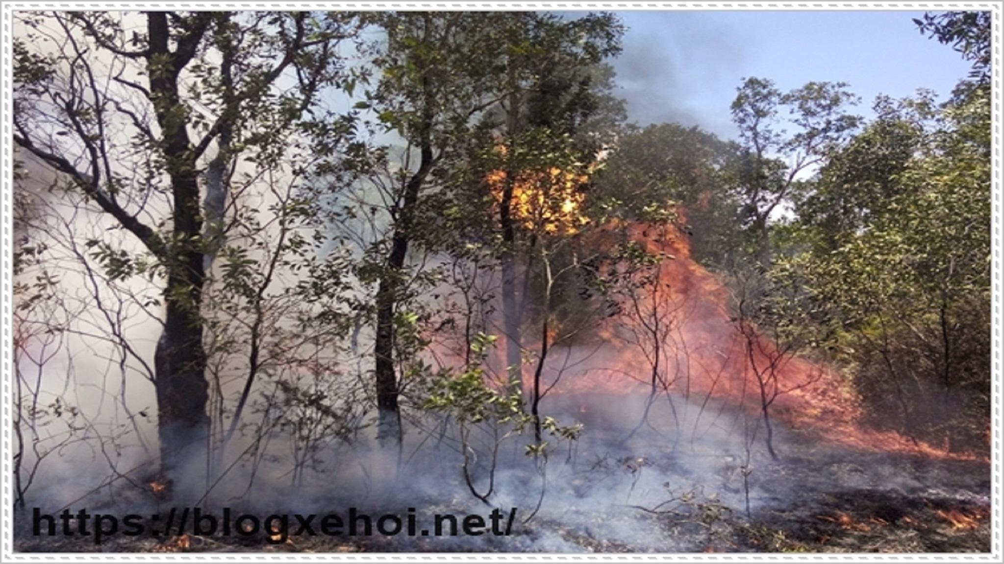 Ô nhiễm môi trường rừng (@onhiemmoitruongrung) Cover Image