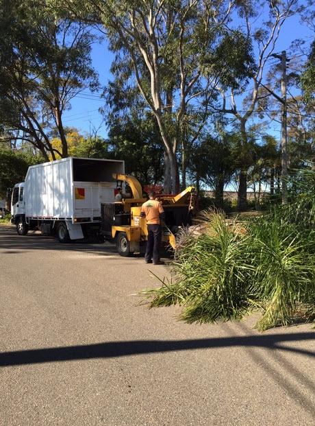 Sydney Urban Tree Services (@sydneyurban) Cover Image