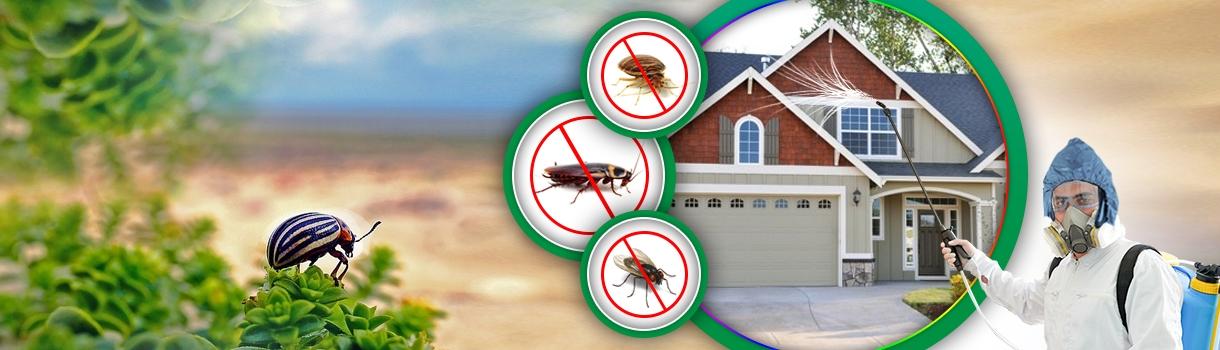 Cockroach Pest Control Bondi (@pestcontrolbondi) Cover Image