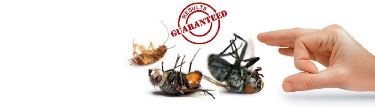 Marks Pest Control in Darlington (@pestcontroldarlington) Cover Image