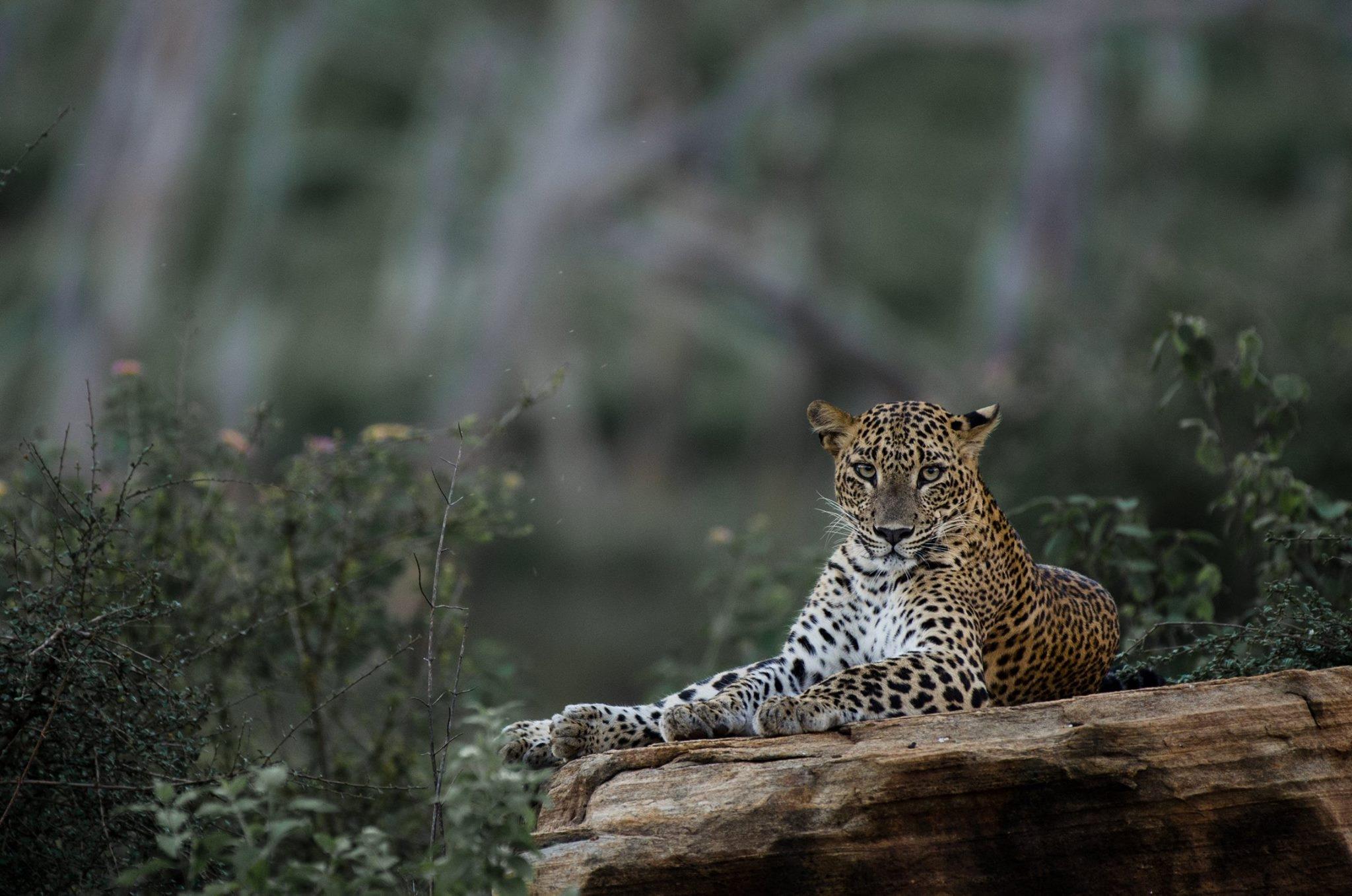 Leopard Trails (@leopardtrailslt) Cover Image
