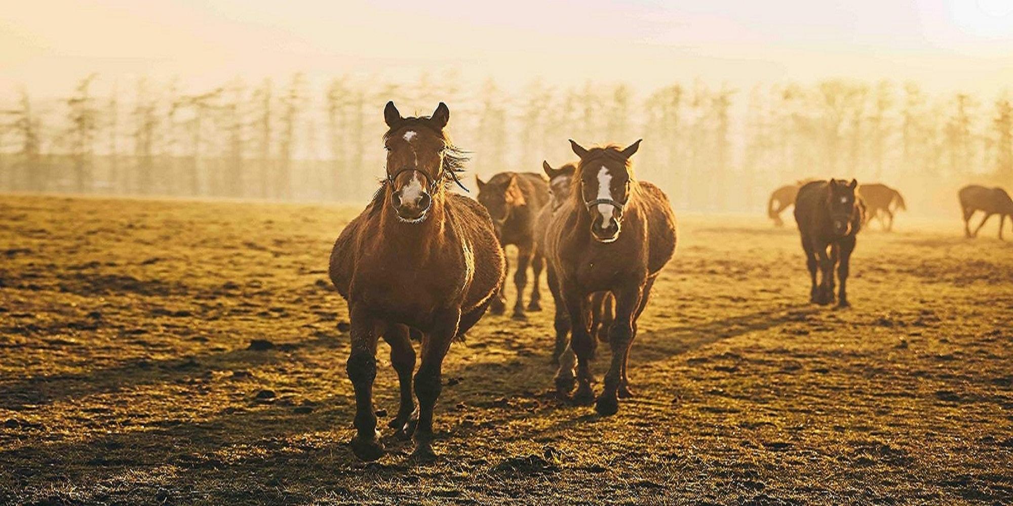Hemp For Horses (@hempforhorses) Cover Image