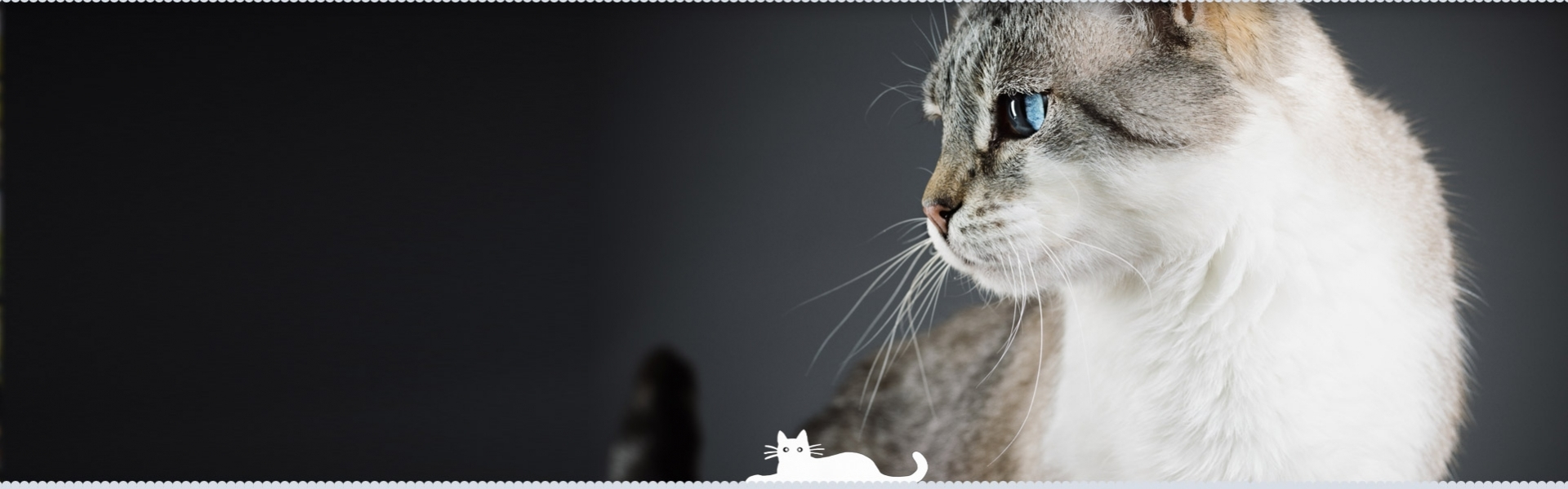 Happy Cats Hotel (@happycatshotel) Cover Image