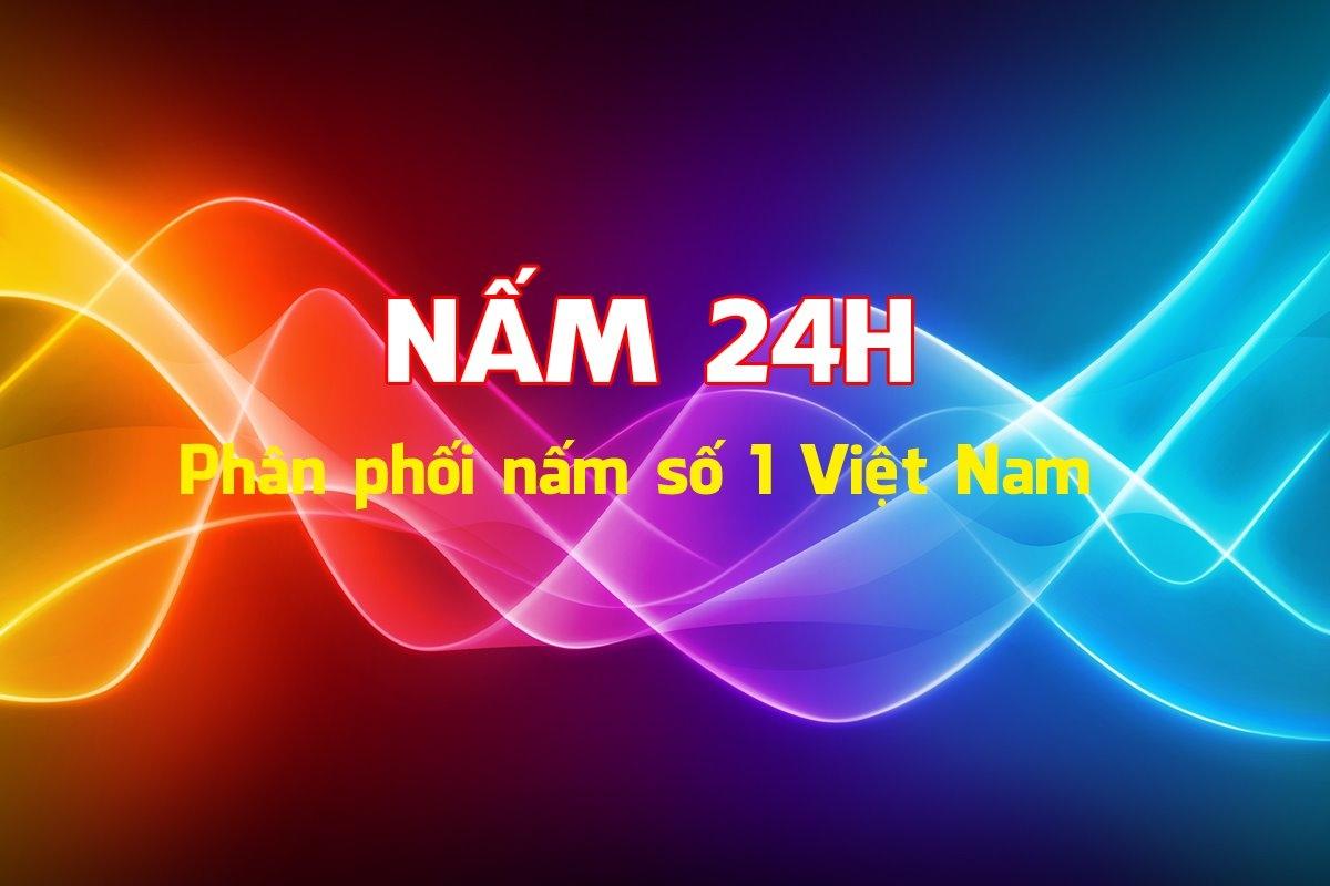 Nấm  (@nam24hvn) Cover Image