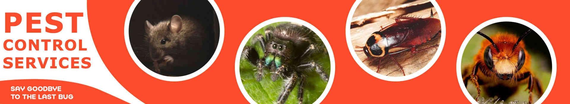 Pest Control Bendigo (@pestcontrolbendigo) Cover Image