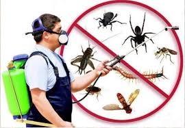 Pest Control Werribee (@pestcontrolwerribee) Cover Image