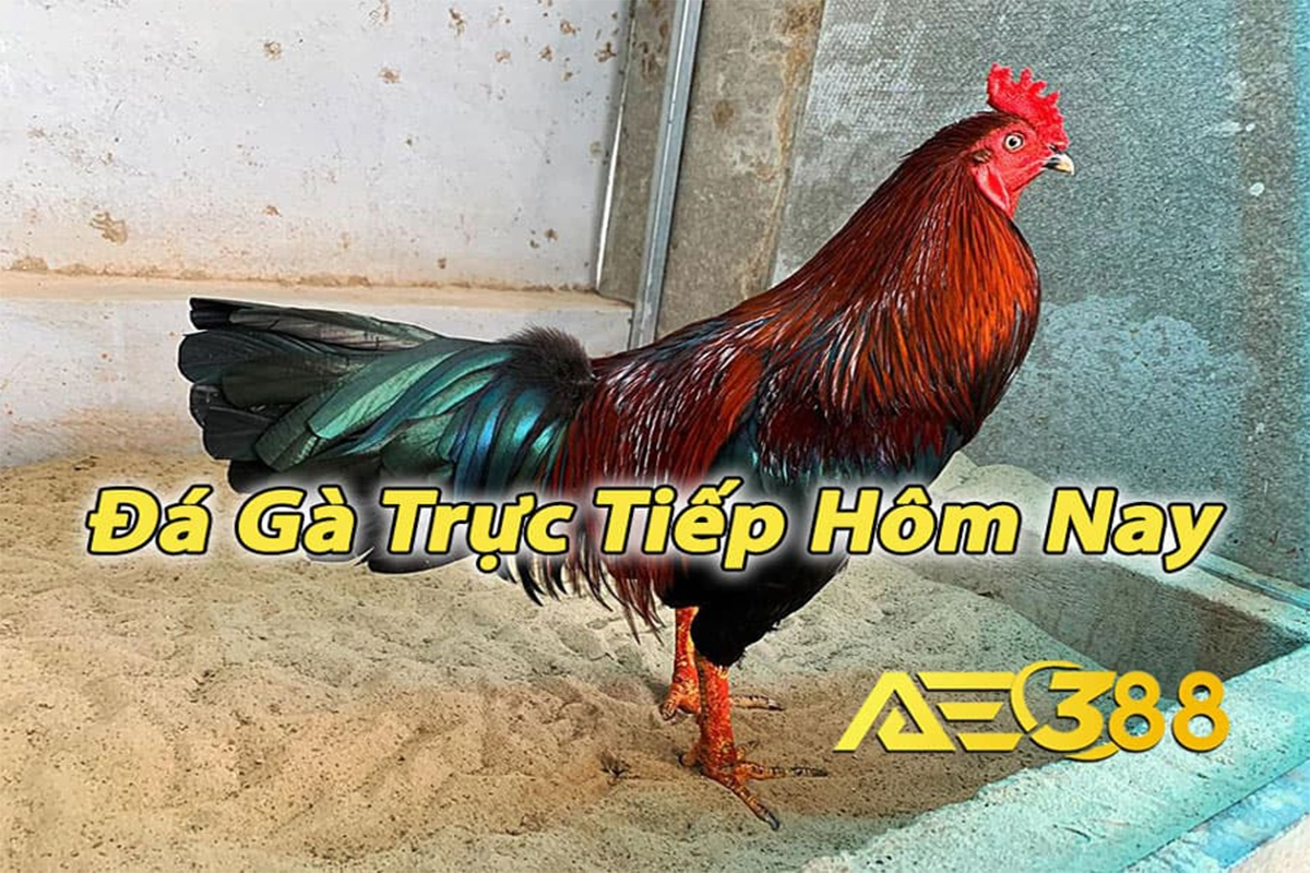 Vương Thomo (@vuongthomo99) Cover Image