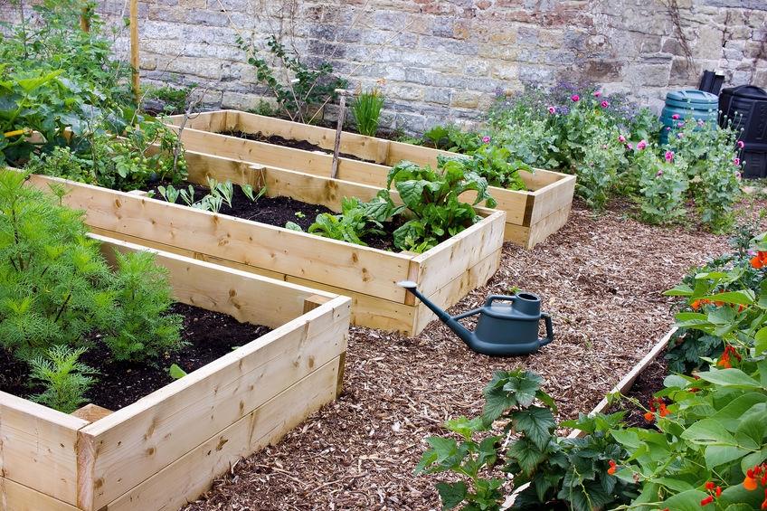 Easily Grow Food (@easilygrowfood) Cover Image