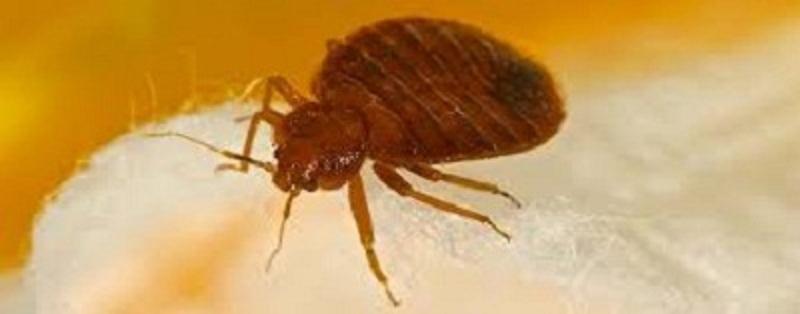 Extermination of Bed Bugs Brisbane (@bedbugsremovalbrisbane) Cover Image