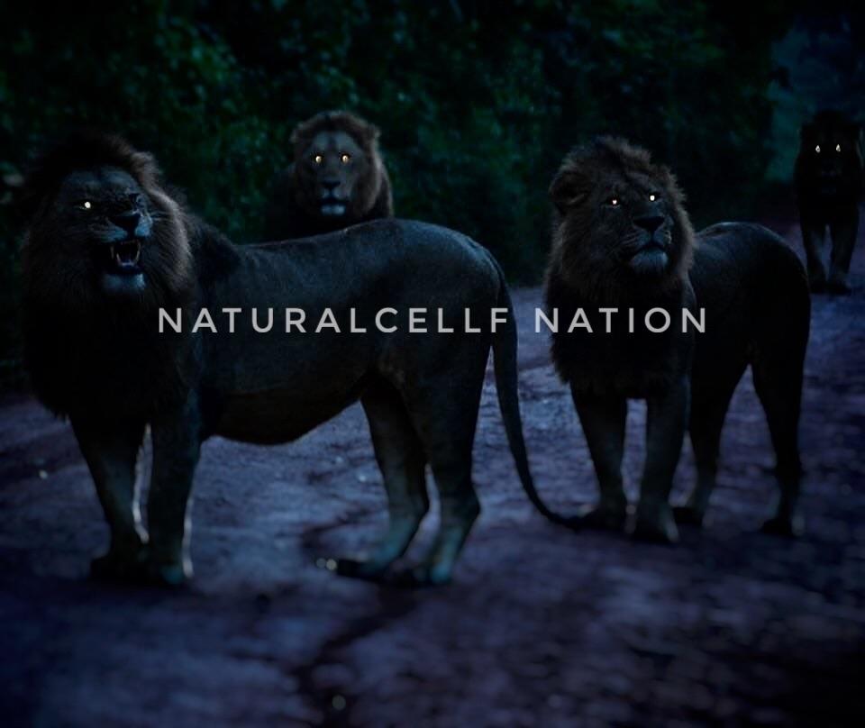 TUANIZ NORIEGA (@naturalcellf) Cover Image