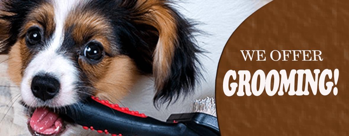 Shaggy Shack Pet Resort (@shaggyshackpetresorts) Cover Image