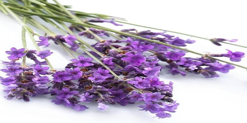 Prayer Lavender Garden (@jhonmax21794) Cover Image