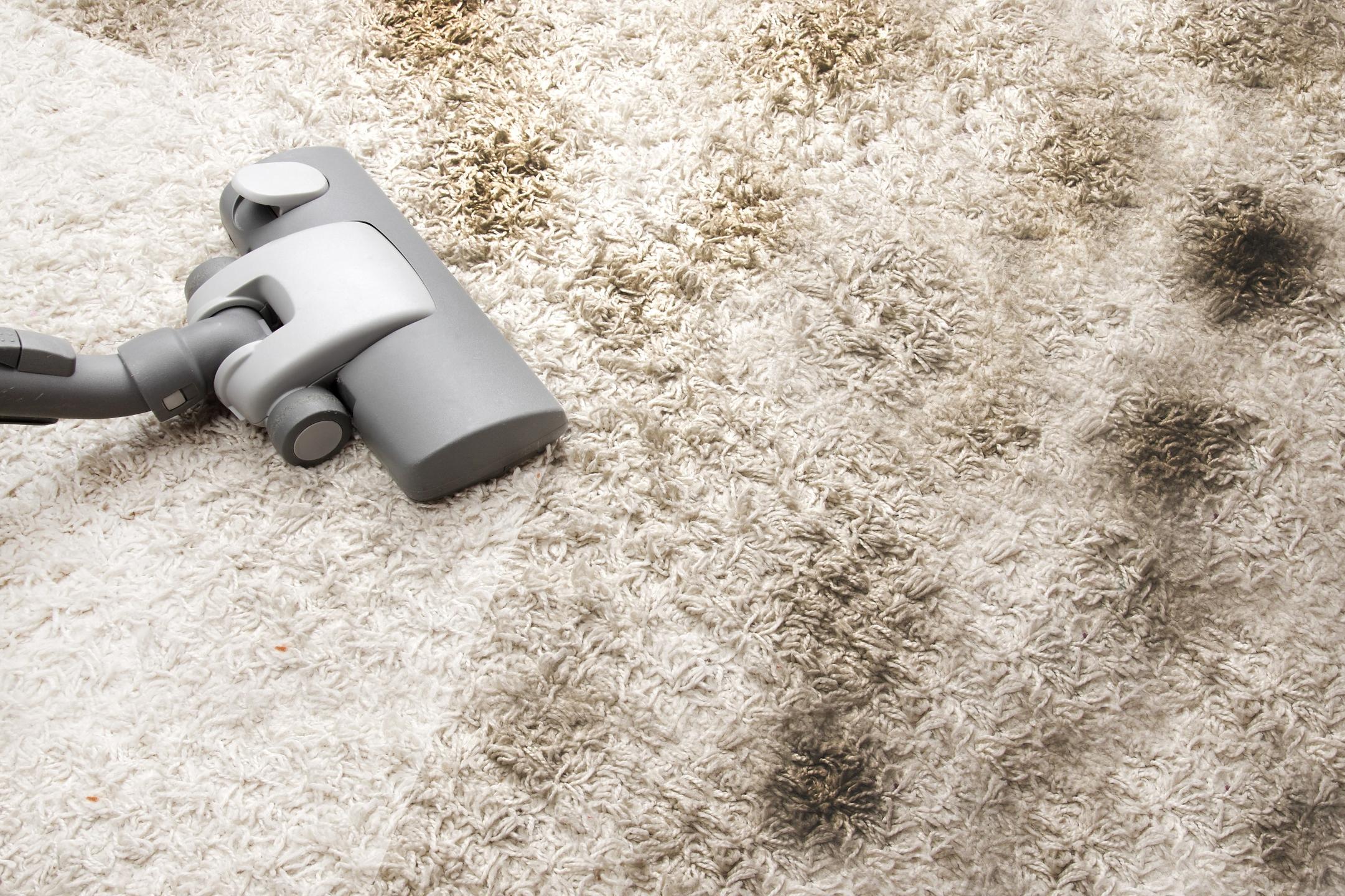 Carpet Cleaning Mosman (@carpetcleaningmosman) Cover Image
