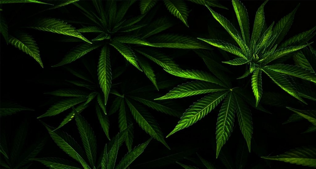 Ganja West Online  (@ganjawestcannabis) Cover Image