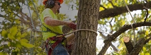Tree Service & Removal Bronx (@removalbronx1) Cover Image