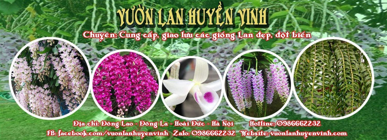 lanhuyenvinh (@lanhuyenvinh) Cover Image