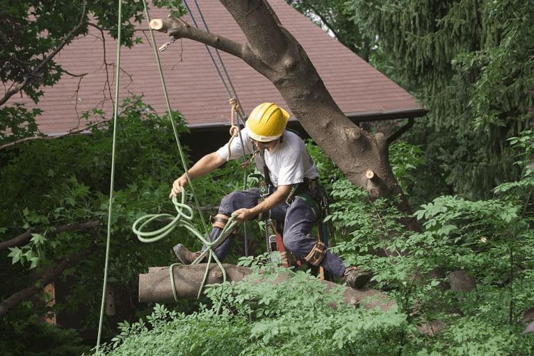 GMK Tree Service (@gmktreeservice) Cover Image