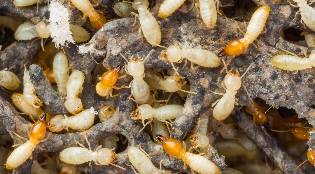 Pest Control Wyndham Vale (@pestcontrolwyndhamvale) Cover Image