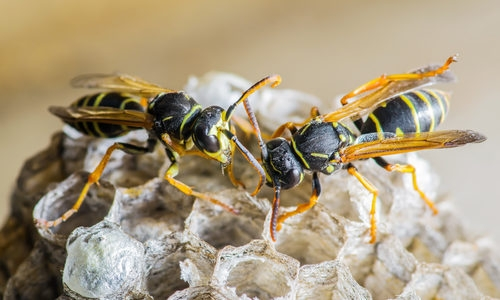 Pest Control Preston (@pestcontrolpreston) Cover Image