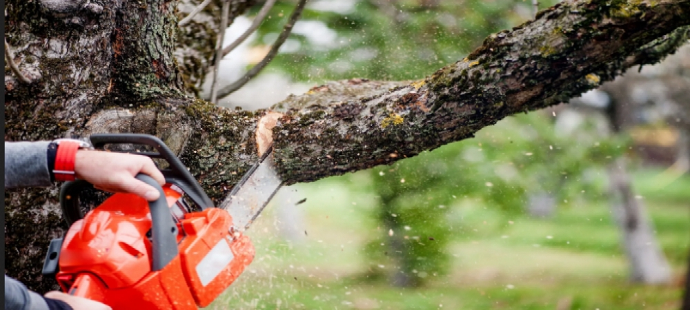 Yes! Trees Tree Service (@yestreesllc) Cover Image