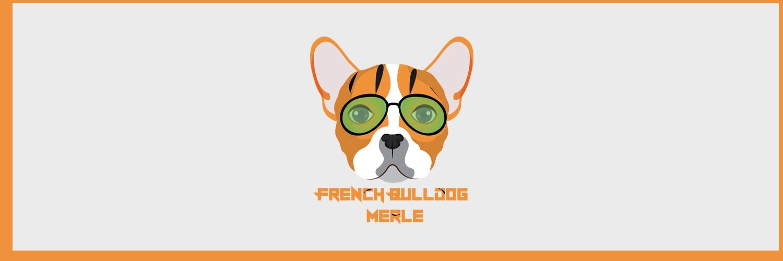 Merle French Bulldog (@merlefrenchbdog) Cover Image