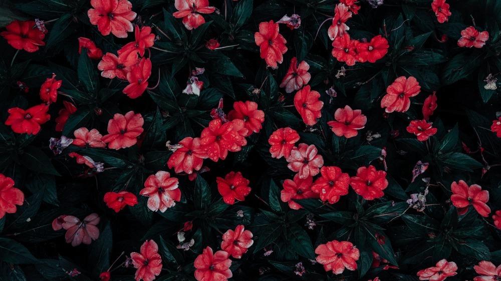 meenu (@meenu08) Cover Image