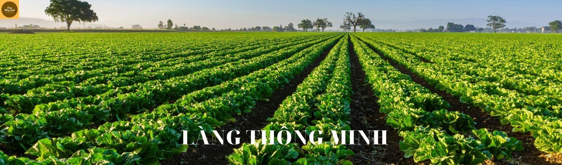 Làng Thông Minh VN (@langthongminhvn) Cover Image