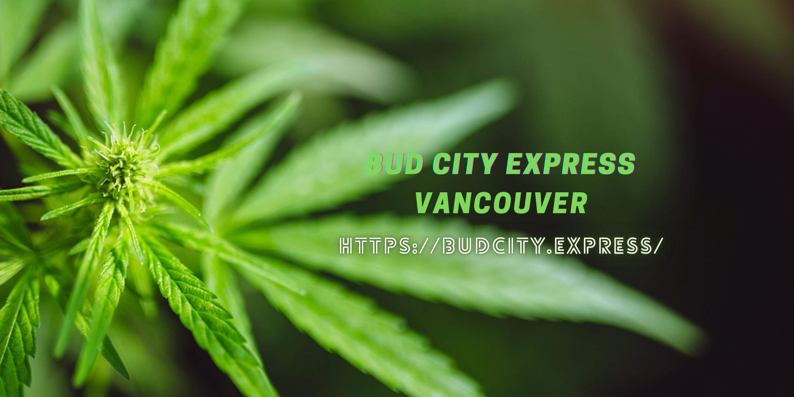 Bud city Express (@budcityexpress) Cover Image