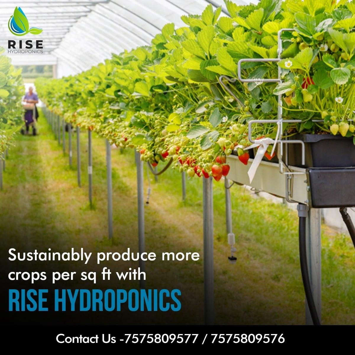 Rise Hydroponics (@rise_hydroponic) Cover Image