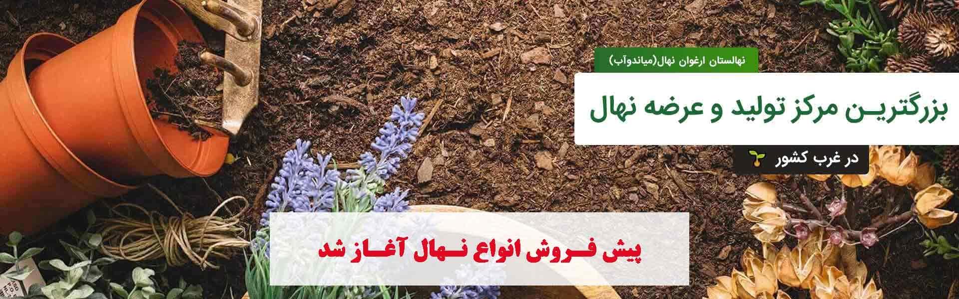nahalargha (@nahalarghavan) Cover Image