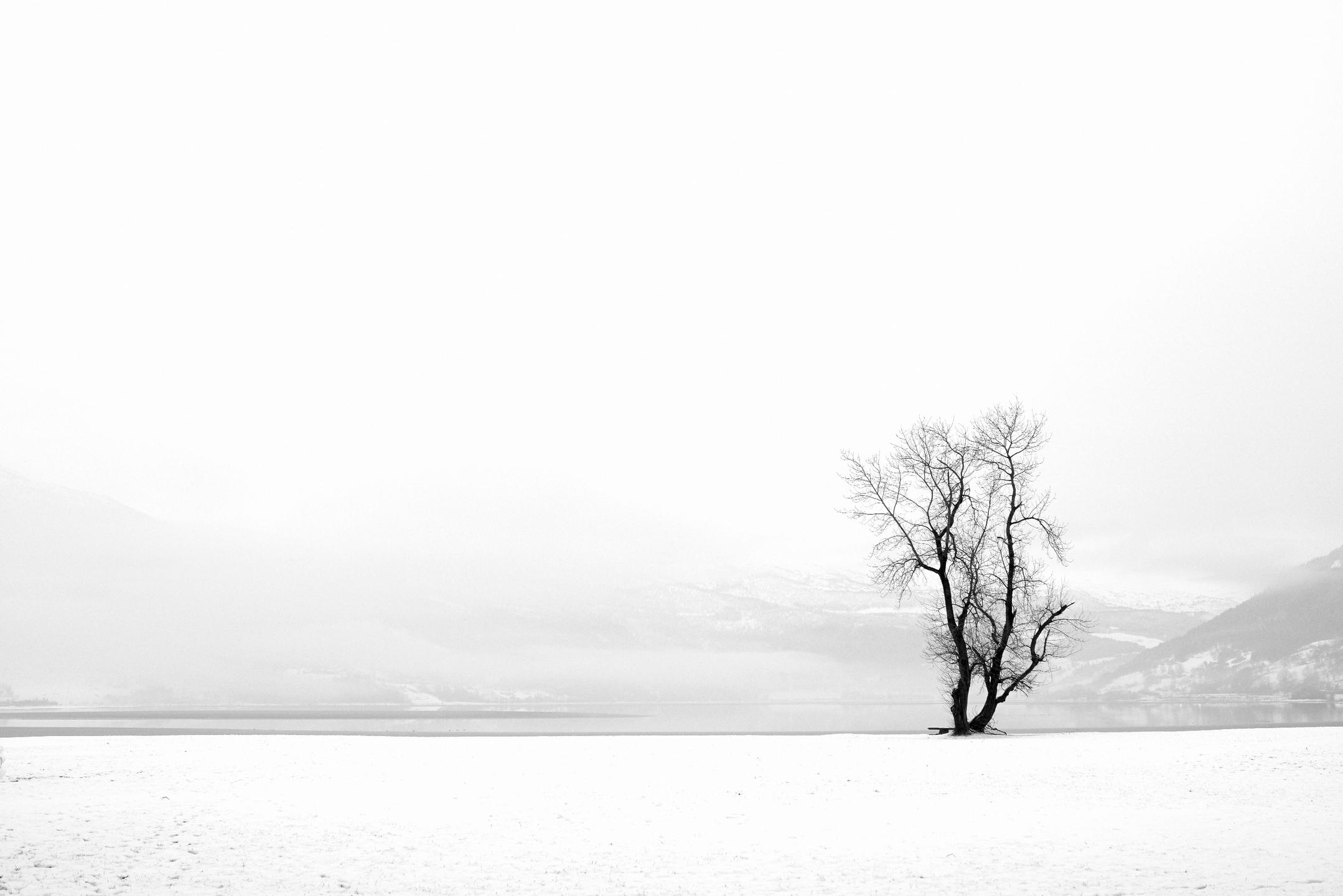 Tore Alvheim (@explirer) Cover Image