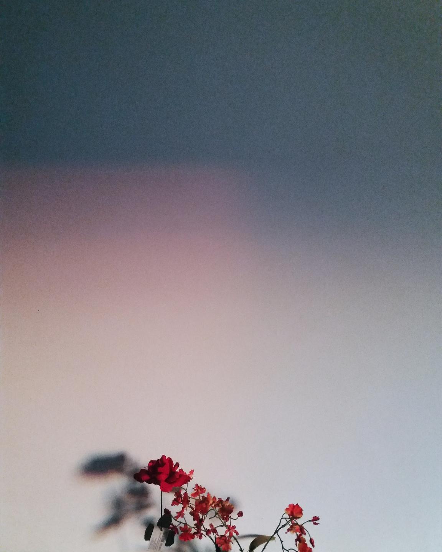 Bruna Hissae (@brunahissae) Cover Image